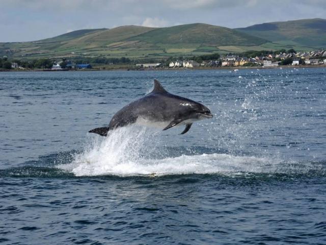 Dingle Dolphin Fungi