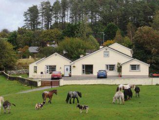 Horse Riding Killarney - Muckross Riding Stables